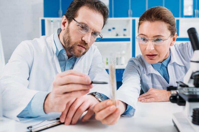 科学家画象看有试剂的实验室外套和镜片的烧瓶工作场所 免版税库存照片