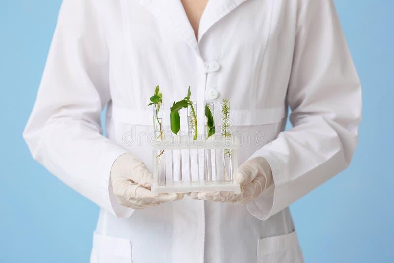 科学家藏品有植物的试管在颜色背景的立场的 库存图片