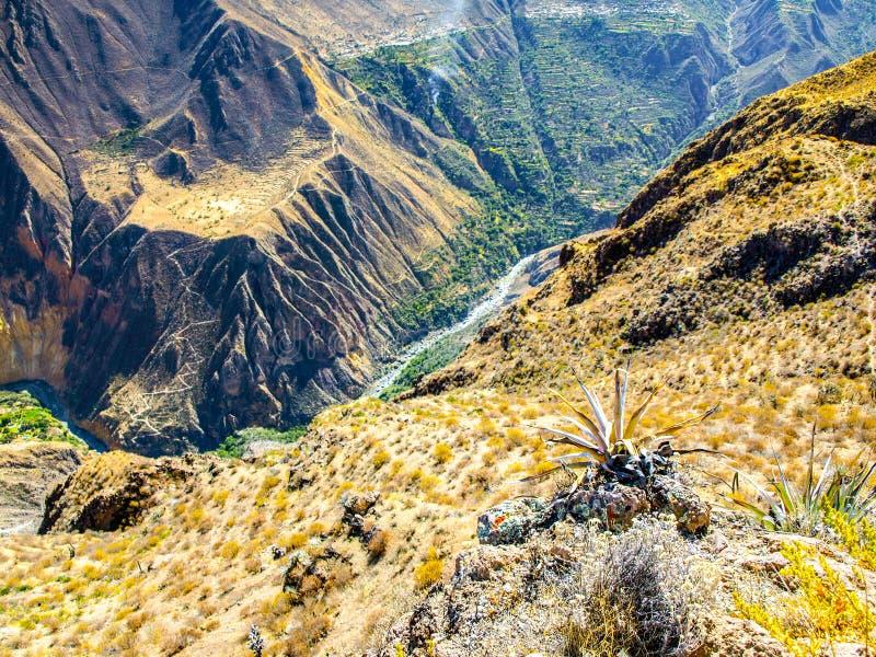 科尔卡峡谷-世界,秘鲁,南美洲的最深的峡谷 免版税库存照片