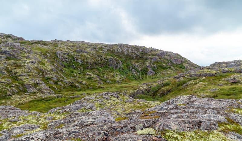 科拉半岛的寒带草原严酷的天气的,绿色的青苔 免版税库存照片
