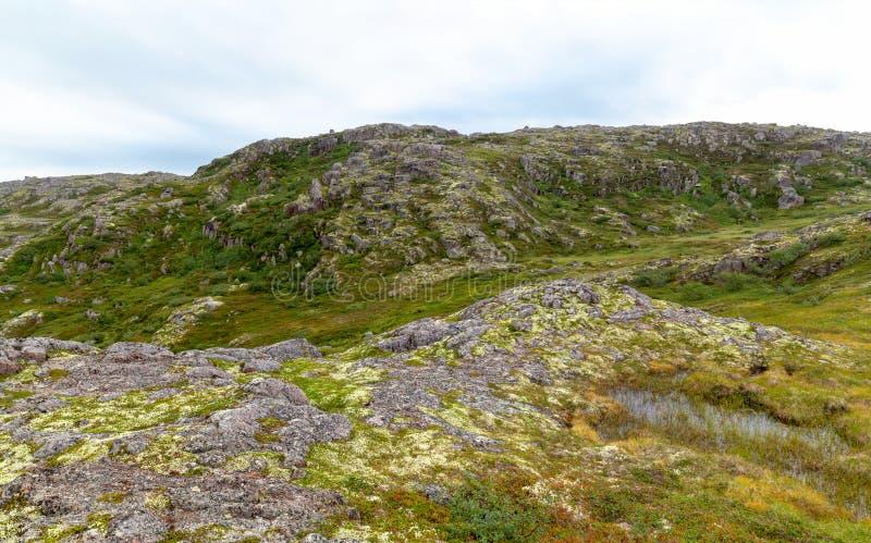 科拉半岛的寒带草原严酷的天气的,绿色的青苔 图库摄影