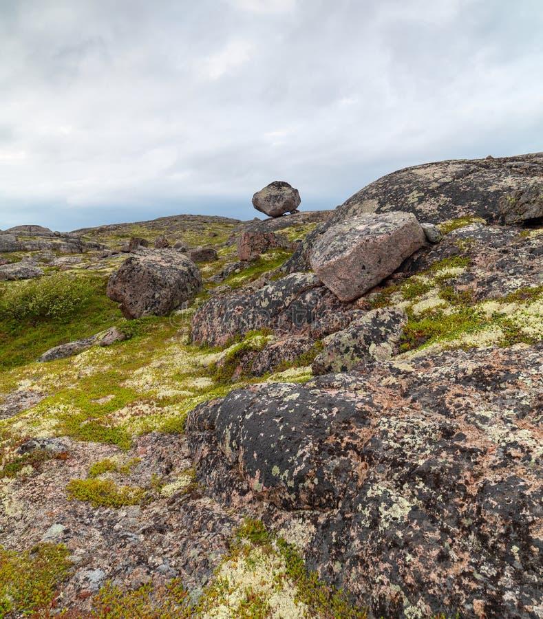 科拉半岛的寒带草原严酷的天气的,绿色的青苔 免版税库存图片