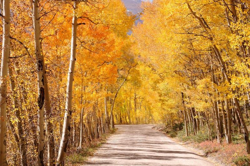 科罗拉多在白杨木下的秋天天包括土路 库存图片