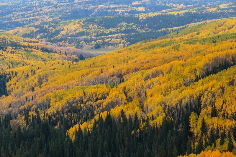科罗拉多落矶山-秋天场面的优美的风景 免版税库存图片