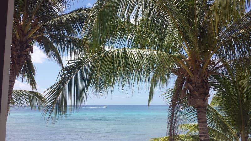 科苏梅尔墨西哥棕榈树 库存照片