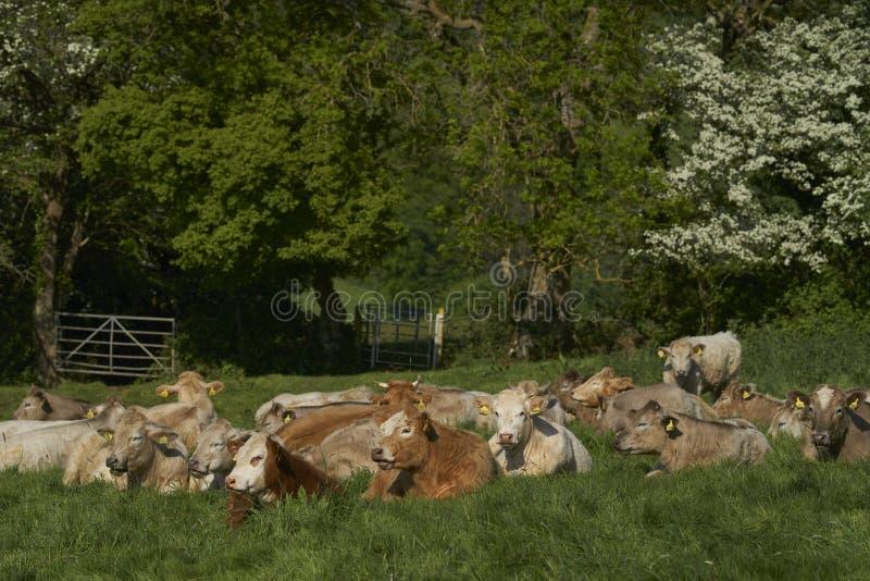 科茨沃尔德的英格兰乡村 免版税图库摄影