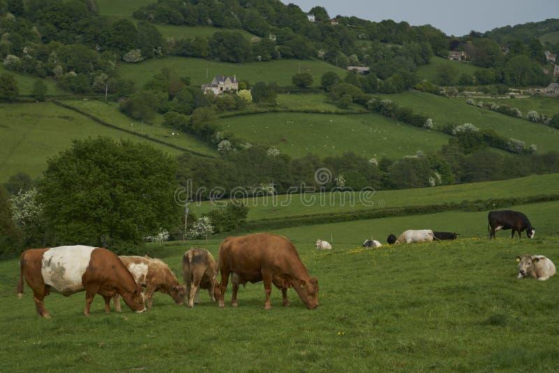 科茨沃尔德的英格兰乡村 库存图片