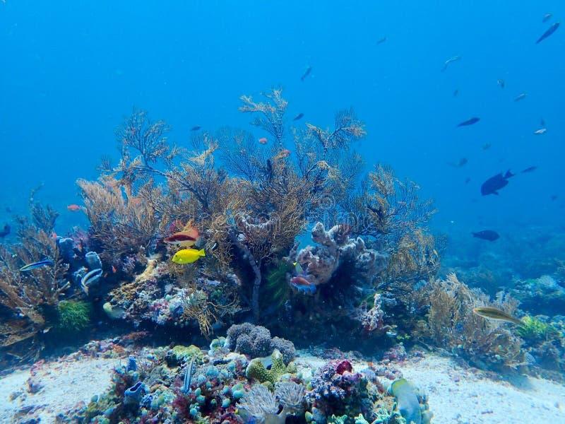 科莫多岛 库存照片