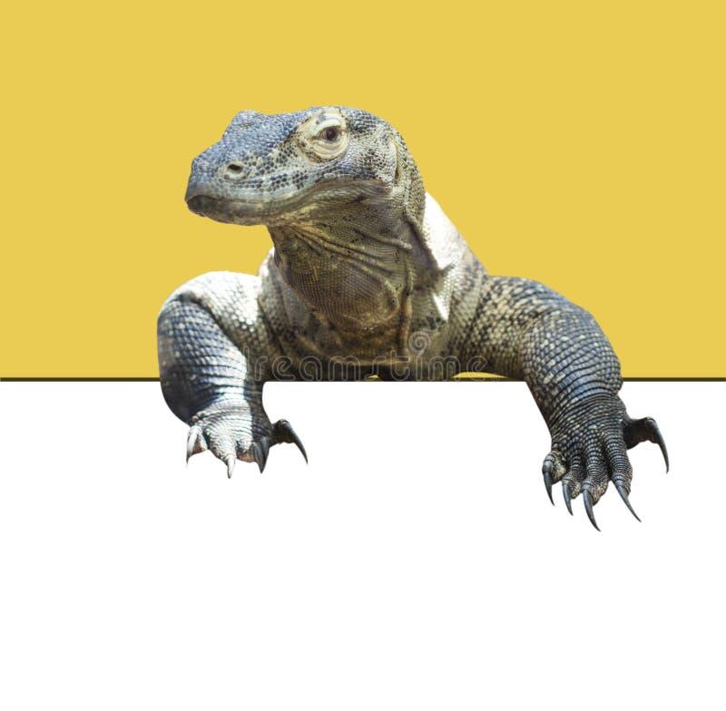 科莫多巨蜥 免版税图库摄影