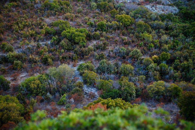 科西嘉岛的看法,令人惊讶的山狂放的植被 E 免版税图库摄影