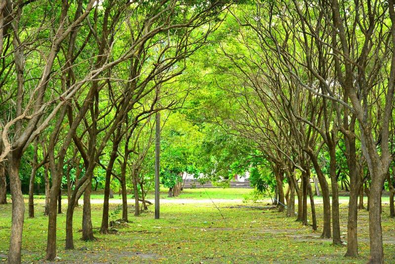 科雷吉多尔岛环绕菲律宾凯维特的树木 免版税库存照片