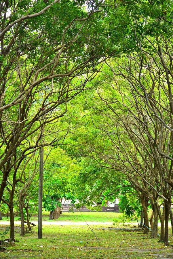 科雷吉多尔岛环绕菲律宾凯维特的树木 库存图片