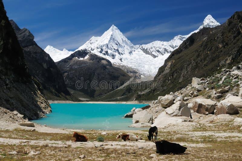 秘鲁,山脉Blanca 图库摄影
