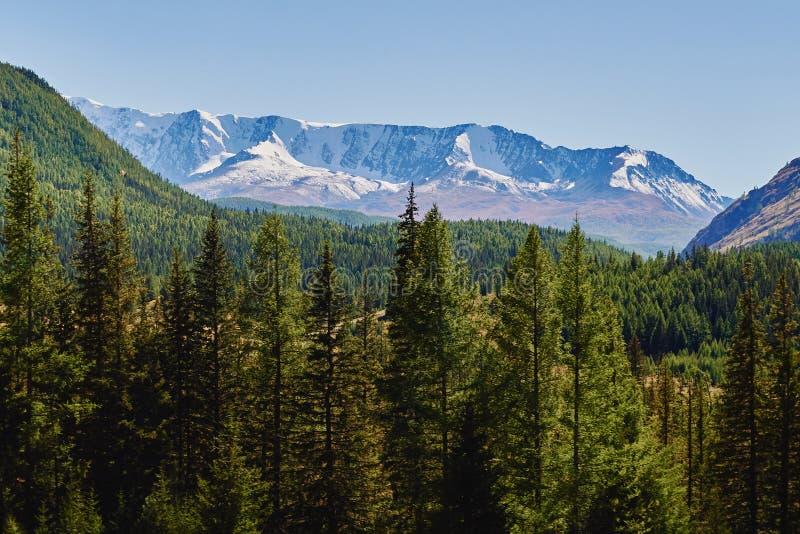 积雪的北部Chuya范围,西伯利亚,俄罗斯的看法在阿尔泰山的 免版税库存图片