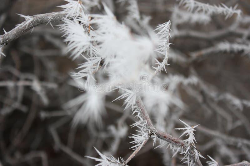 积雪的树在沙漠 库存图片