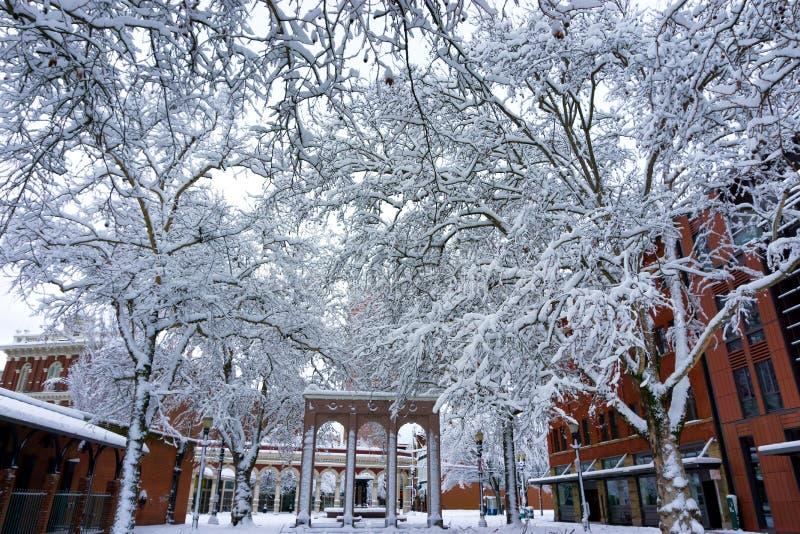 积雪的树在Ankeny广场 免版税库存图片