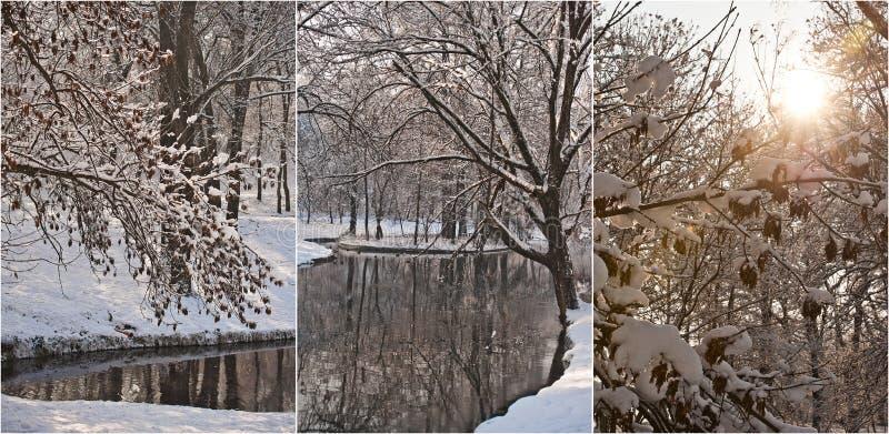 积雪的树枝在晴朗的冷的冬日 美好的冬天在森林里环境美化,有雪和冻河的 图库摄影