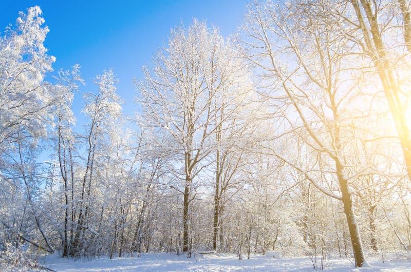 积雪的树枝的冬天种类反对蓝色清楚的冷淡的天空的 免版税库存照片