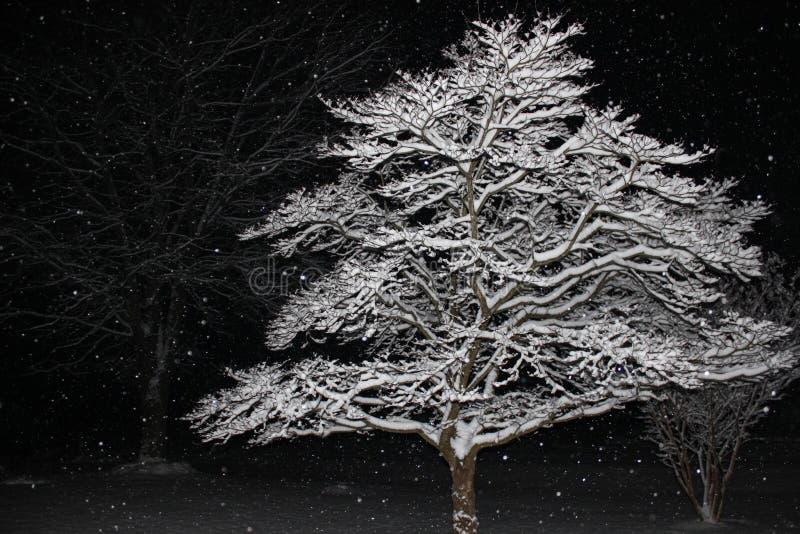 积雪的树枝被阐明反对夜黑色  免版税库存图片
