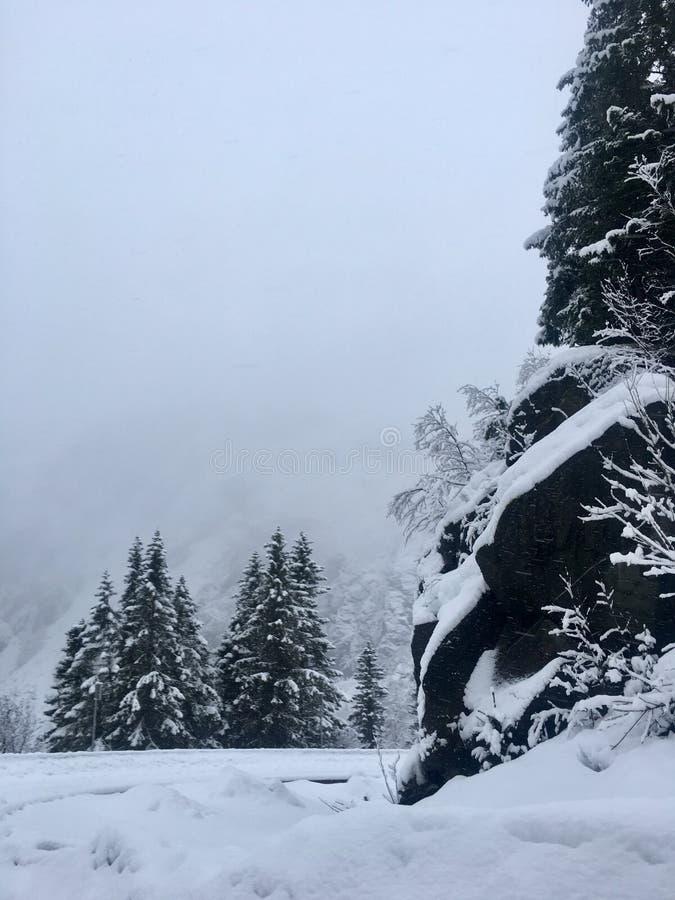 积雪的树,挪威 库存照片
