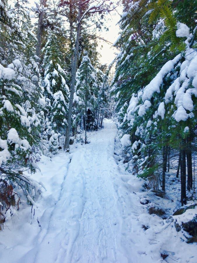 积雪的足迹通过森林 免版税库存图片