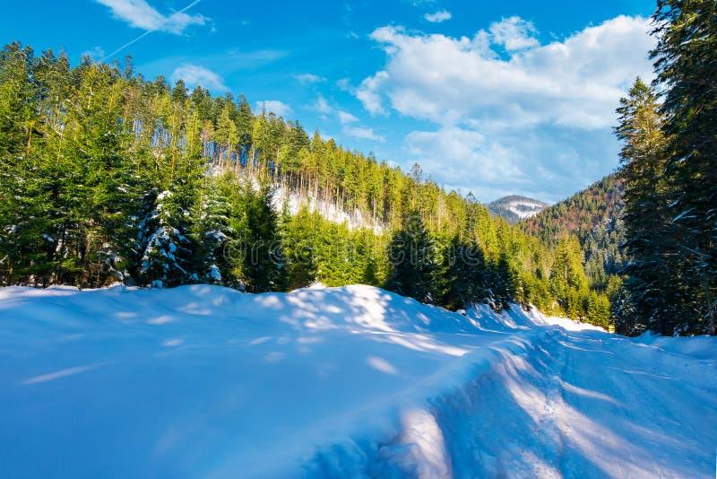 积雪的路下坡通过云杉的森林 免版税图库摄影