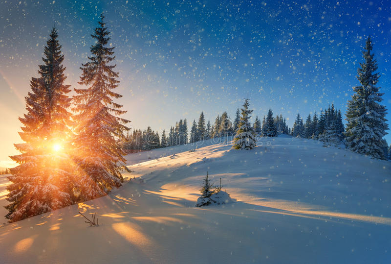 积雪的针叶树树和雪看法剥落在日出 圣诞快乐的或新年的背景 免版税图库摄影