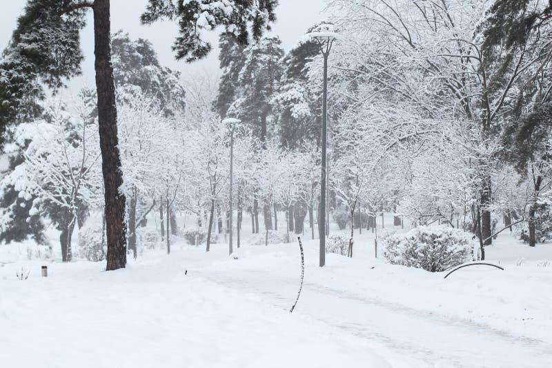 积雪的长凳美好的冬天夜风景在多雪的树和光亮的光中的在降雪期间 艺术性的图片 免版税库存照片