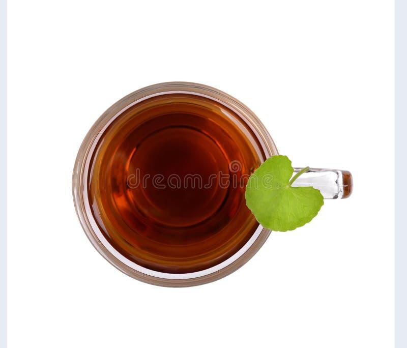 积雪草茶,白背景的积雪草热茶,在玻璃杯上留下积雪草; 免版税库存照片