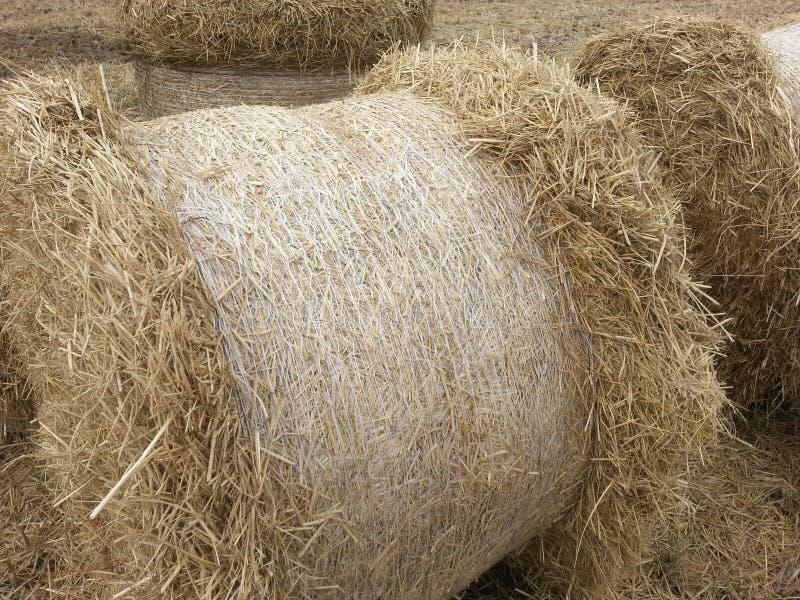秸杆堆农厂农业 免版税库存照片