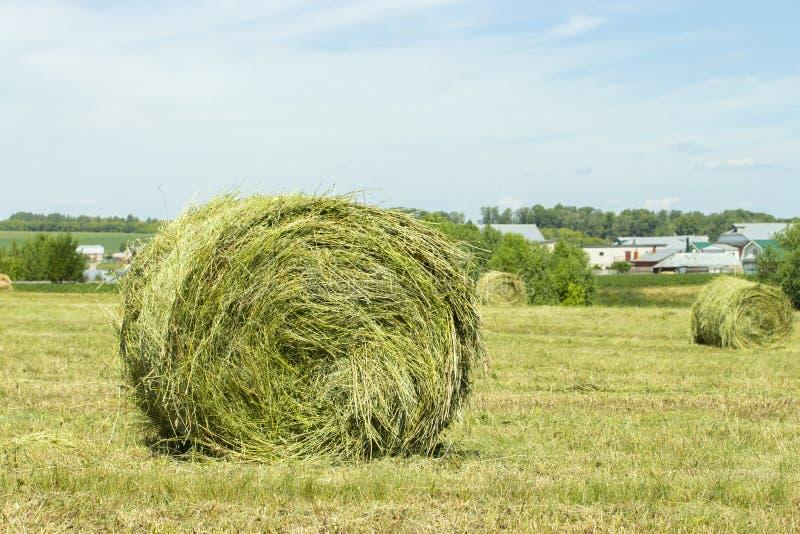 秸杆干草堆被扭转入在领域的卷 村庄是可看见的在天际 干草收获 免版税库存照片