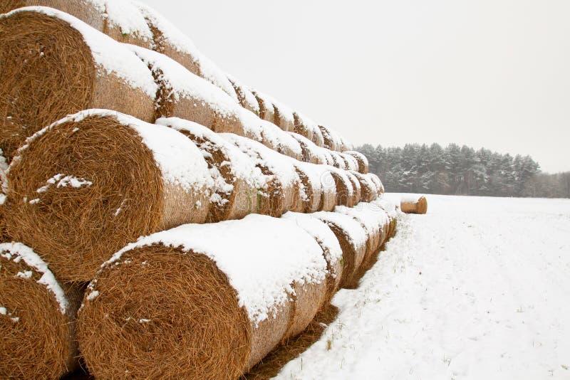 秸杆饲料大包在冬天 库存照片