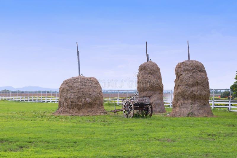 秸杆,在收获以后的米秸杆堆在农场 免版税库存照片