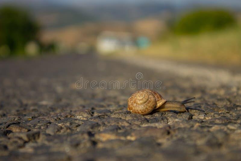 移动在高温的柏油路蜗牛 免版税图库摄影