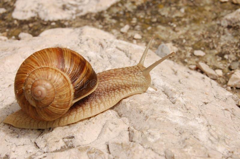 移动岩石蜗牛 免版税库存图片