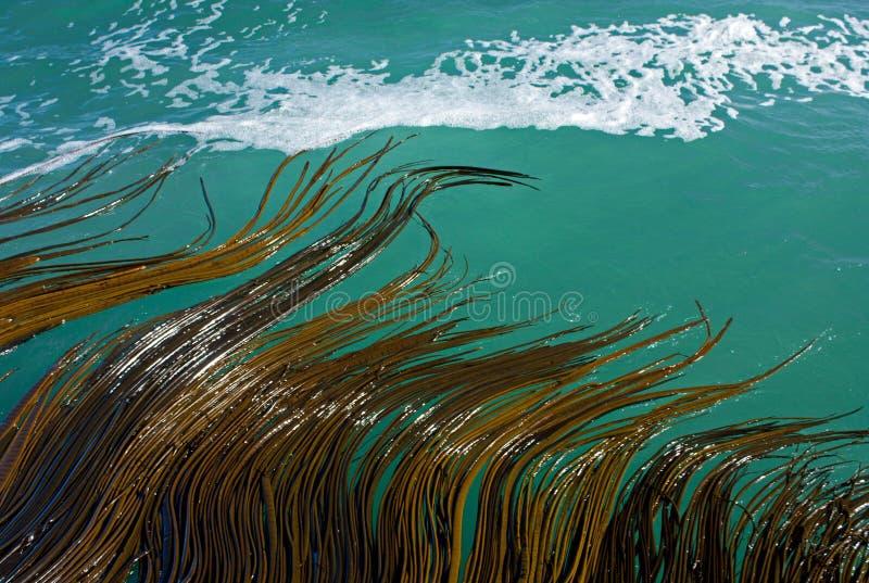 移动海草的波浪在海在新西兰 库存照片