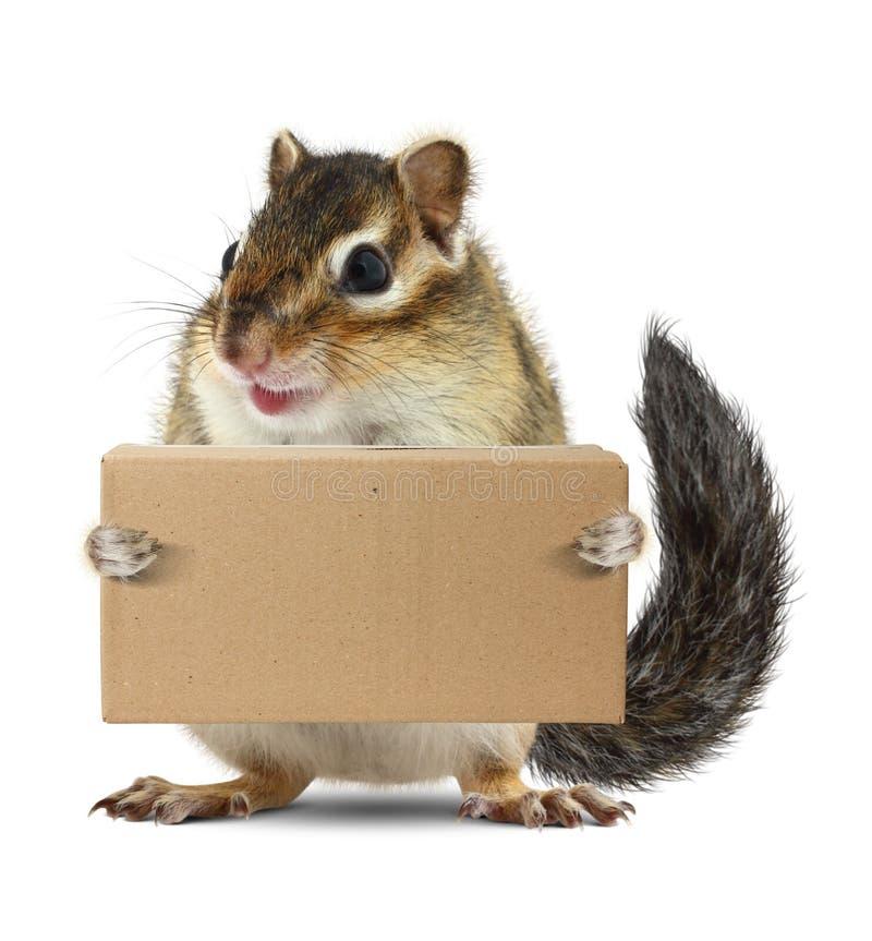 滑稽的动物花栗鼠举行箱子,交付概念 免版税库存图片