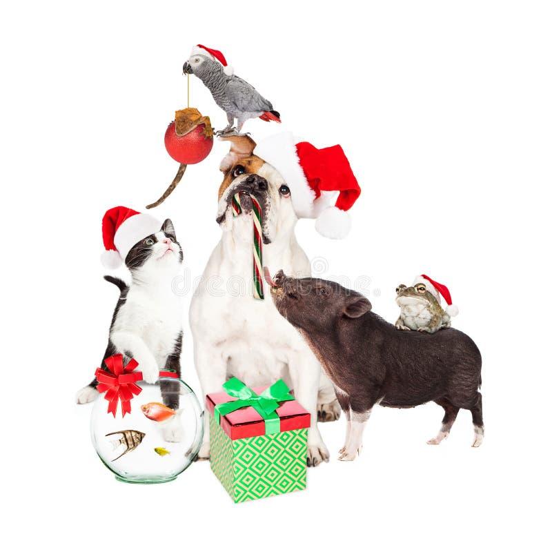 滑稽的圣诞节宠物Compositie 库存图片