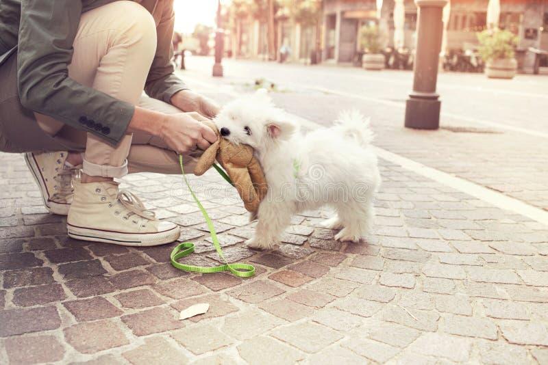 滑稽的小狗使用与他的所有者在都市地方 库存照片