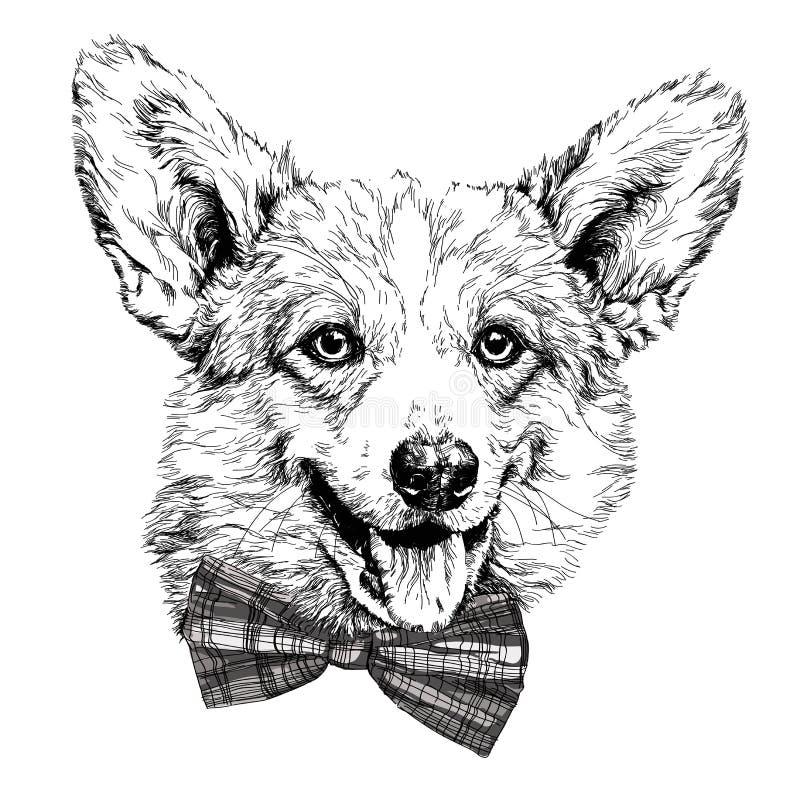 滑稽的彭布罗克角威尔士小狗狗葡萄酒减速火箭的行家样式剪影  库存例证