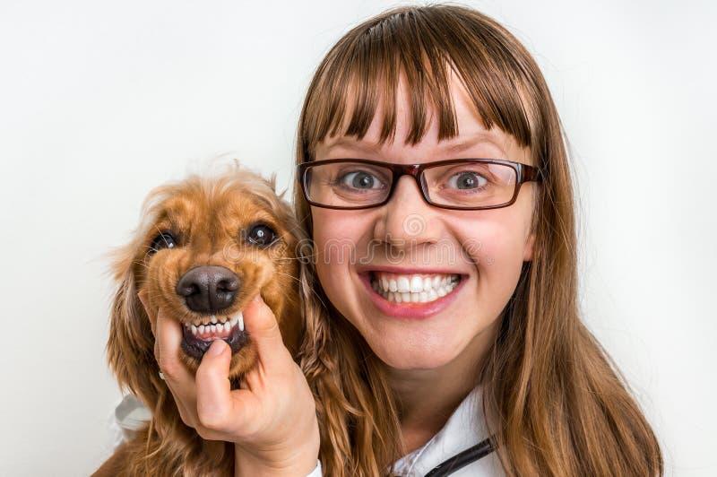 滑稽的微笑的狗和兽医兽医诊所的 免版税库存照片