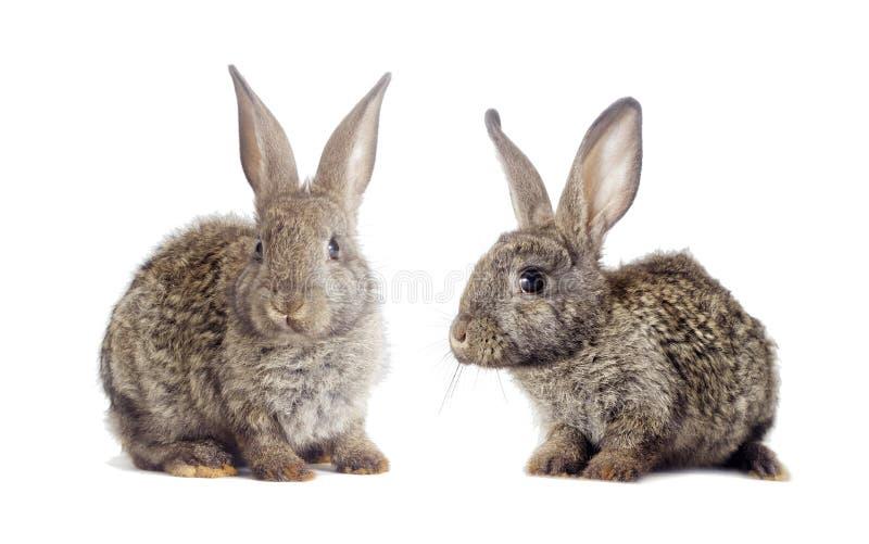 Download 滑稽的灰色兔子 库存照片. 图片 包括有 国内, 查找, 幽默, 农场, 逗人喜爱, 纵向, 婴孩, 背包 - 72361008