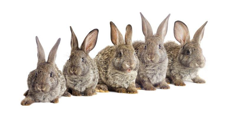 Download 滑稽的灰色兔子 库存图片. 图片 包括有 婴孩, 背包, 逗人喜爱, 农场, 空白, 兔子, 宠物, 幽默 - 72361531
