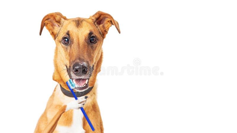 滑稽的狗掠过的牙 免版税库存照片