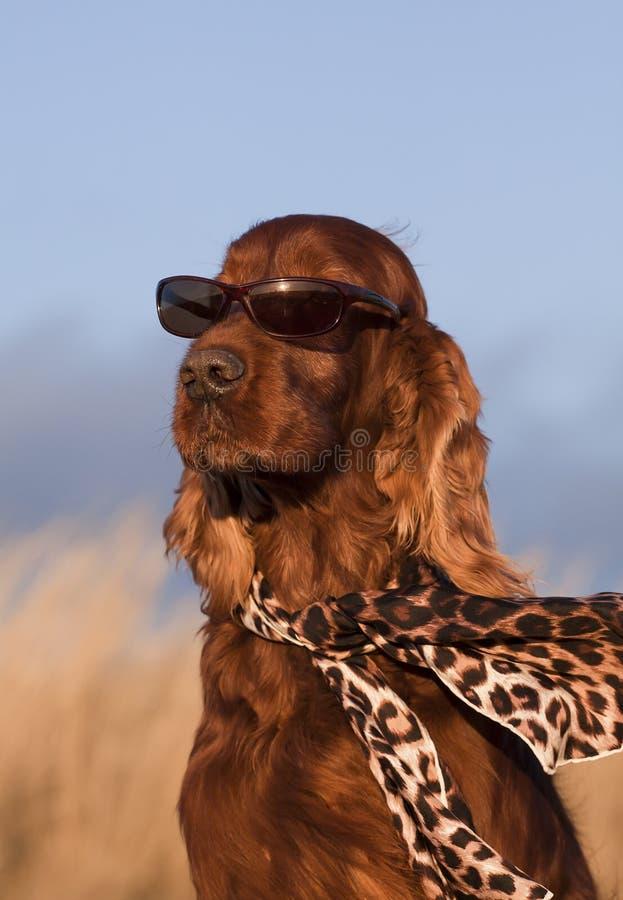 滑稽的狗 免版税库存图片