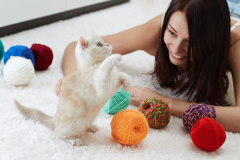 滑稽的猫 免版税库存照片