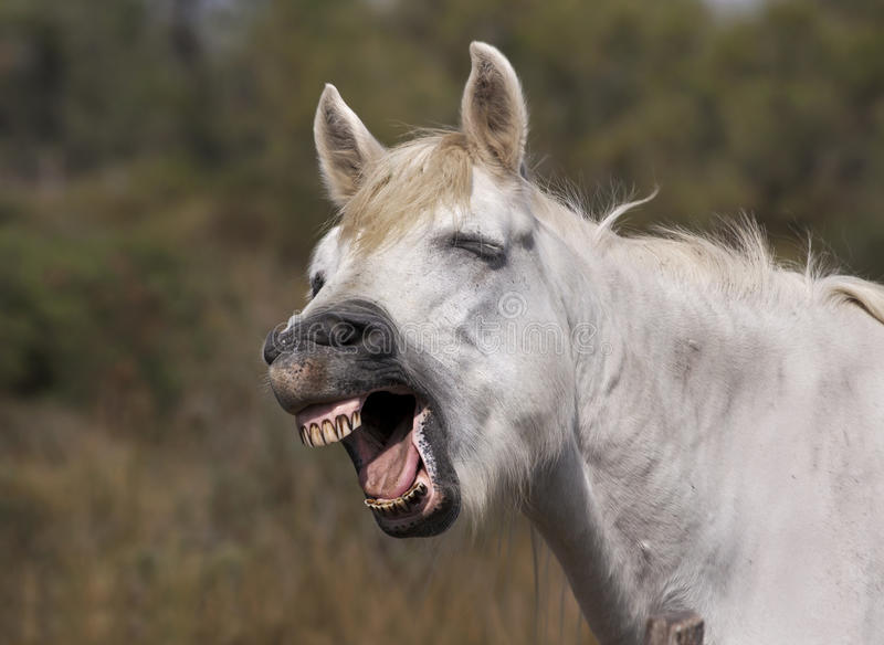 滑稽的马纵向 免版税库存图片
