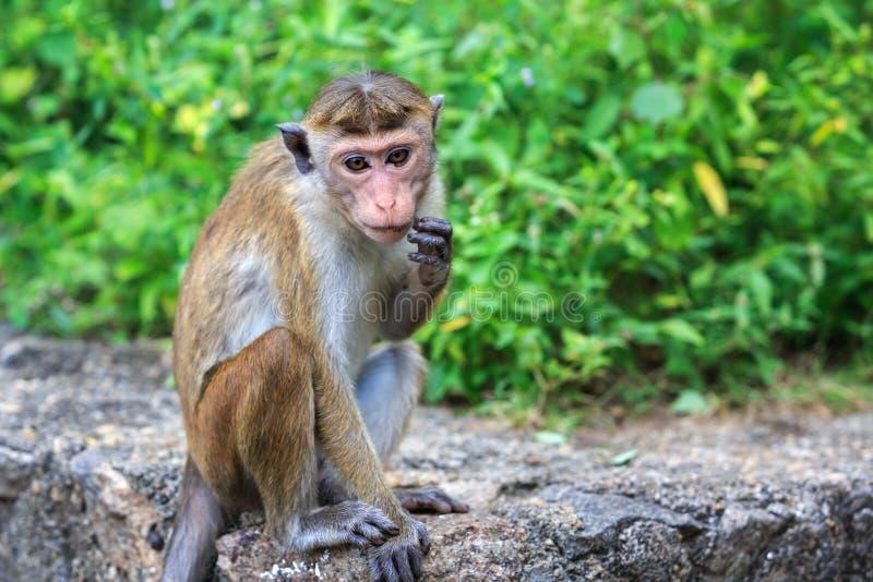 滑稽的猴子 图库摄影