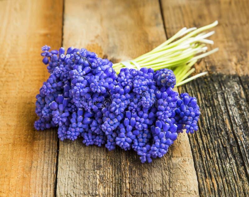 穆斯卡里紫色开花花束 免版税图库摄影