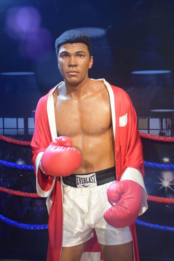 穆罕默德・阿里专家拳击手 库存图片